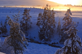 Winter Sunshine on Dava Moor