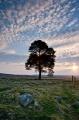 dallas-sunrise-tree